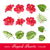 Set of tropical flowers elements Stock Images