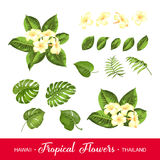Set of tropical flowers elements Royalty Free Stock Image