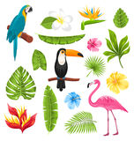 Set Tropical Flowers, Exotic Birds and Plants Royalty Free Stock Photo