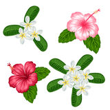 Set of tropical flowers hibiscus and plumeria. Objects for decoration holiday invitations, greeting cards, posters Stock Images
