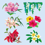 Set of tropical flowers Royalty Free Stock Photography