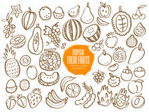 Set of tropical fruit doodles Stock Image