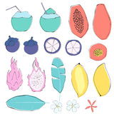 Set of tropical fruits and flowers. Hand drawn style. Isolated. Beautiful set for your summer design Royalty Free Stock Photo