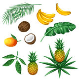 Set of tropical fruits and leaves. Objects for decoration, design on advertising booklets, packaging, menu, flayers Stock Photo