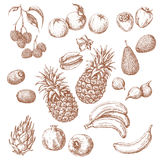 Set of Tropical Fruits Sketch Stock Images