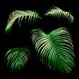 Set of tropical green areca palm leaf, plant vector illustration Stock Photography