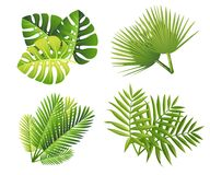 Set of tropical green leaves. Flat style palm leaf. Exotic plants icon. Vector illustration isolated on white background.  stock photos