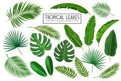 Set Tropical Leaves Royalty Free Stock Photo