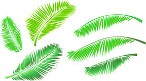 Set of tropical leaves Stock Photography