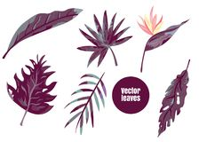 Set of tropical leaves agave, monstera etc.  Stock Images