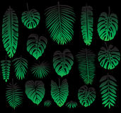 Set of Tropical Leaves on black Stock Image