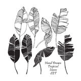 Set of tropical leaves, black silhouettes and outlined images isolated on white background. Vector. Illustration Royalty Free Stock Photos