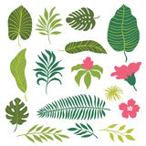 Set of tropical leaves Royalty Free Stock Image