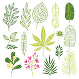 Set of tropical leaves Stock Image