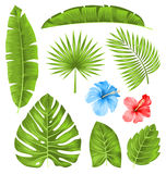 Set of Tropical Leaves, Collection Plants  Stock Photo