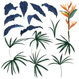 Set of tropical leaves and exotic plants vector vector illustration