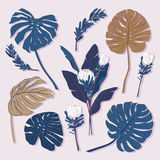 Set of tropical leaves, and floral elements on light grey backgr Royalty Free Stock Image