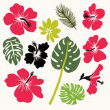 Set of tropical leaves and flowers Royalty Free Stock Photography