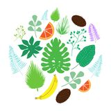 Set of tropical leaves and fruits icons in circle vector illustration