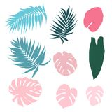 Set of tropical leaves isolated design elements. Tropical plant elements set isolated on white background. Collection of exotic rainforest jungle palm tree and Stock Photography