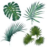 Set of tropical leaves. isolated on white background. Vector illustration Royalty Free Stock Photos