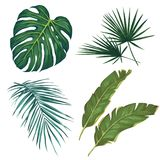 Set of tropical leaves. isolated on white background. Vector illustration Royalty Free Stock Photo