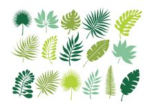 Set of tropical leaves. Jungle foliage. Green palm leaves on the white background.Tropical set Stock Images