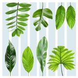 Set with tropical leaves. On patterned background royalty free stock image