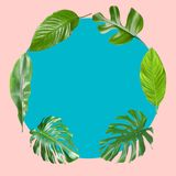 Set of tropical leaves with space for design. On color background royalty free stock image