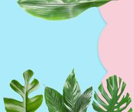 Set of tropical leaves with space for design. On color background stock photography