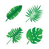 Set of tropical leaves. Vector illustration. on a white background Stock Photo