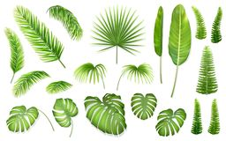Vector set tropical leaves. Set of tropical leaves. Vector realistic exotic plants for design invitation card or advertising vacation offer Stock Images