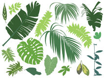 Set of tropical leaves Royalty Free Stock Photography