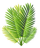 Set of Tropical Palm Leaves - for design elements, scrapbooking in  summer background for the website or the brochure.  Stock Image