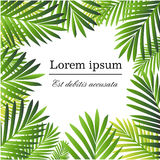 Set of Tropical Palm Leaves - for design elements, scrapbooking in  summer background for the website or the brochure.  Royalty Free Stock Image