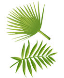 Set of Tropical Palm Leaves - for design elements, scrapbooking in  summer background for the website or the brochure Royalty Free Stock Photography
