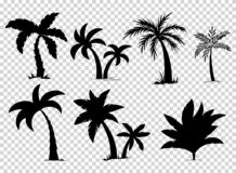 Set tropical palm trees with leaves, mature and young plants, black silhouettes isolated on white background. Vector. royalty free illustration