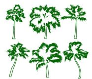Set tropical palm trees with leaves, mature and young plants, green silhouettes isolated on white background. Vector royalty free illustration