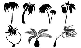 Set tropical palm trees with leaves, mature and young plants. stock illustration