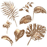 Set of tropical plant leaf. Hand drawn branches and leaves of tropical plants Stock Image