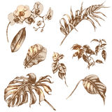 Set of tropical plant leaf. Hand drawn branches and leaves of tropical plants Royalty Free Stock Photos