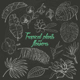 Set of  tropical plants and flowers on dark background Stock Images