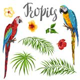 Set of tropical plants and parrots. Palm leaves, hibiscus flowers and exotic birds royalty free illustration