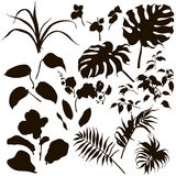 Set of tropical plants silhouette. Hand drawn branches and leaves of tropical plants. Set of tropical plants silhouette Royalty Free Stock Photography