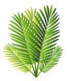 Set Tropikalna palma Opuszcza - dla projektów elementów, scrapbooking w lata tle dla strony internetowej lub broszurki Obraz Stock