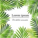 Set Tropikalna palma Opuszcza - dla projektów elementów, scrapbooking w lata tle dla strony internetowej lub broszurki Obraz Royalty Free