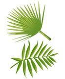 Set Tropikalna palma Opuszcza - dla projektów elementów, scrapbooking w lata tle dla strony internetowej lub broszurki Fotografia Royalty Free