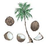 Set tropikalne owoc całe i plasterki na białym tle Zdjęcia Royalty Free