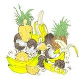 Set tropikalne owoc całe i plasterki na białym tle obraz stock