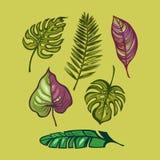 Set tropische Blätter Banane verlässt, Palme, Hibiscus, monstera Lokalisierte Gegenstände Dschungel, exotisch Schablone für Ihre  stock abbildung